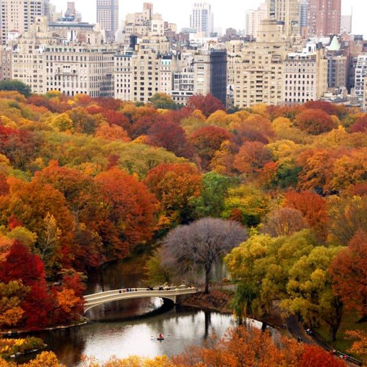 Stewardship of Central Park's woodlands - October 5, 2012 http://tclf.org/sites/default/files/microsites/bridging2/index.html