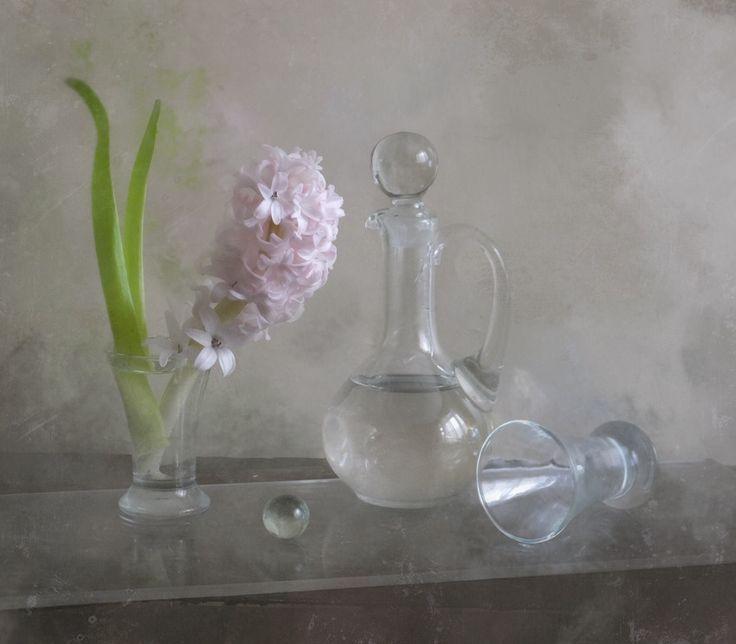 С бледным гиацинтом гиацинт цветок
