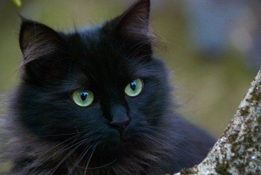 What are the Best Names for Black Cats?