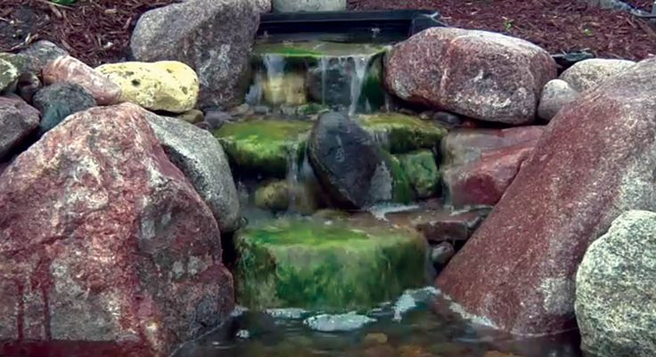1000 Images About Pond Maintenance Tips On Pinterest