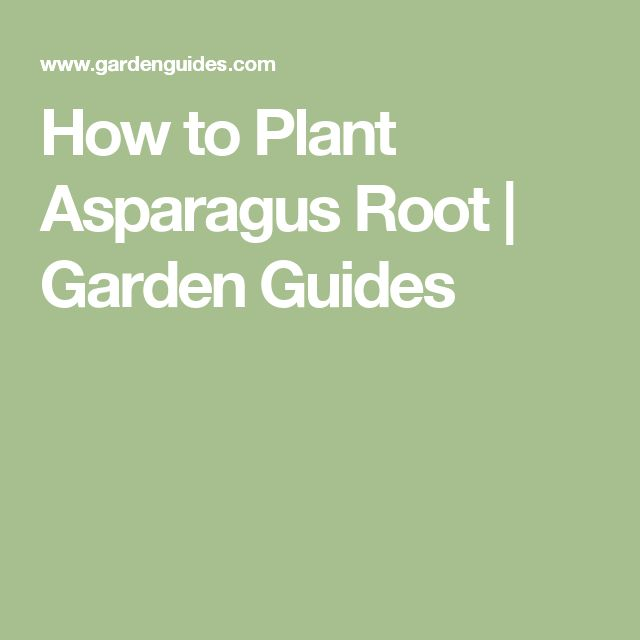 How to Plant Asparagus Root | Garden Guides