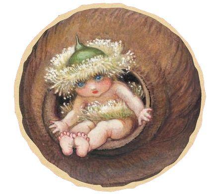 Ragged Blossom, a gumnut baby.
