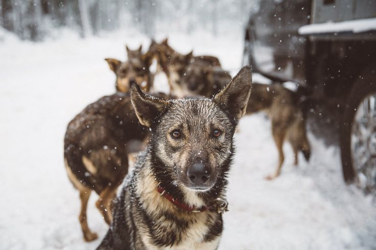 Leader of the pack by Bryan Daugherty