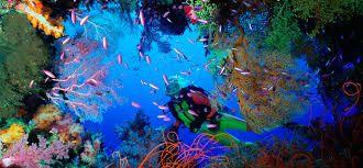 Resultado de imagen de recursos de la barrera de coral australia