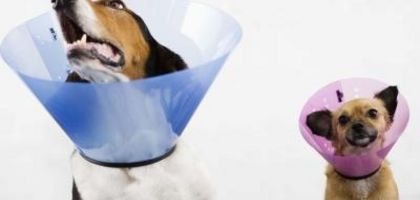 Creating a homemade dog cone can save you money.
