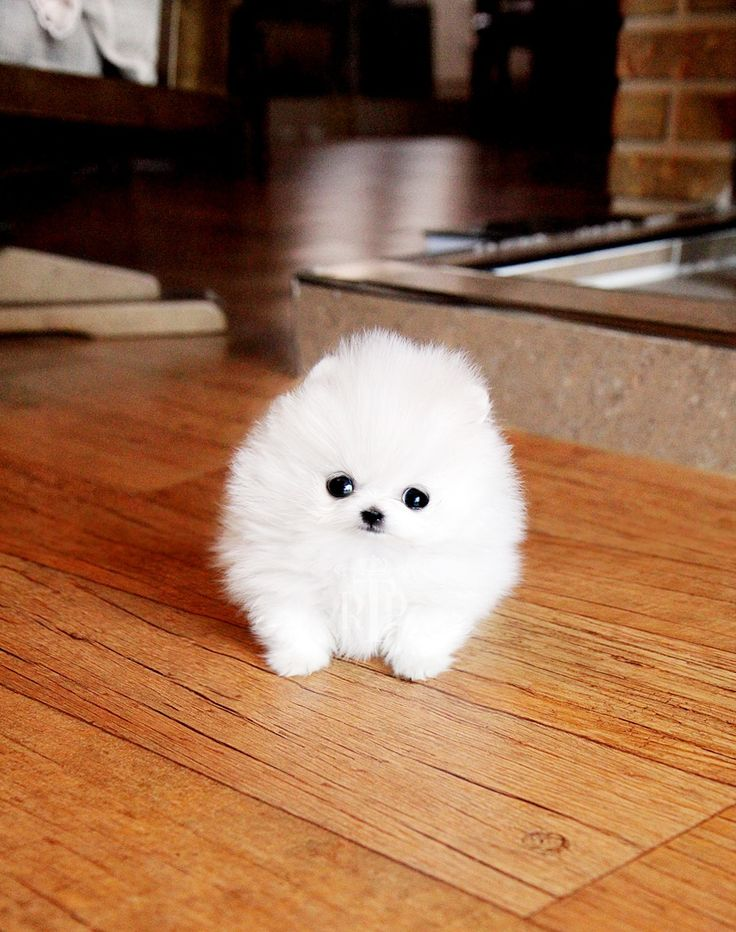 Okay you've got to admit that this is cute! I mean look at it, it's just a white fluffball with three black dots on it. It's so cute!!