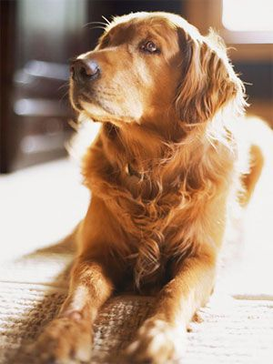How to Take Pet Pictures - Pet Photography - Good Housekeeping