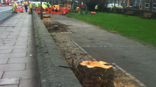 Edinburgh Coates Crescent: Trees as old as 100 years will later be replaced
