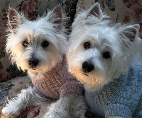 80 best images about Dogs on Pinterest