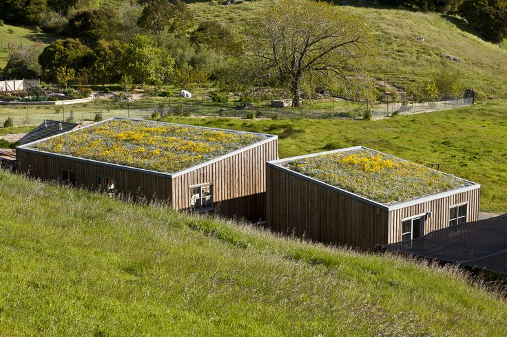 Green roof blending into hillside context - West Marin Ranch, Turnbull Griffin Haesloop Architects