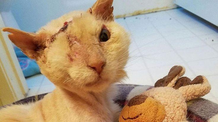 ✔Спасение животных. Кошка облитая кислотой мучилась несколько дней