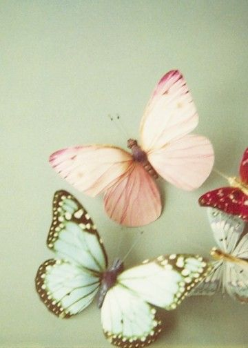 Soft butterfly's