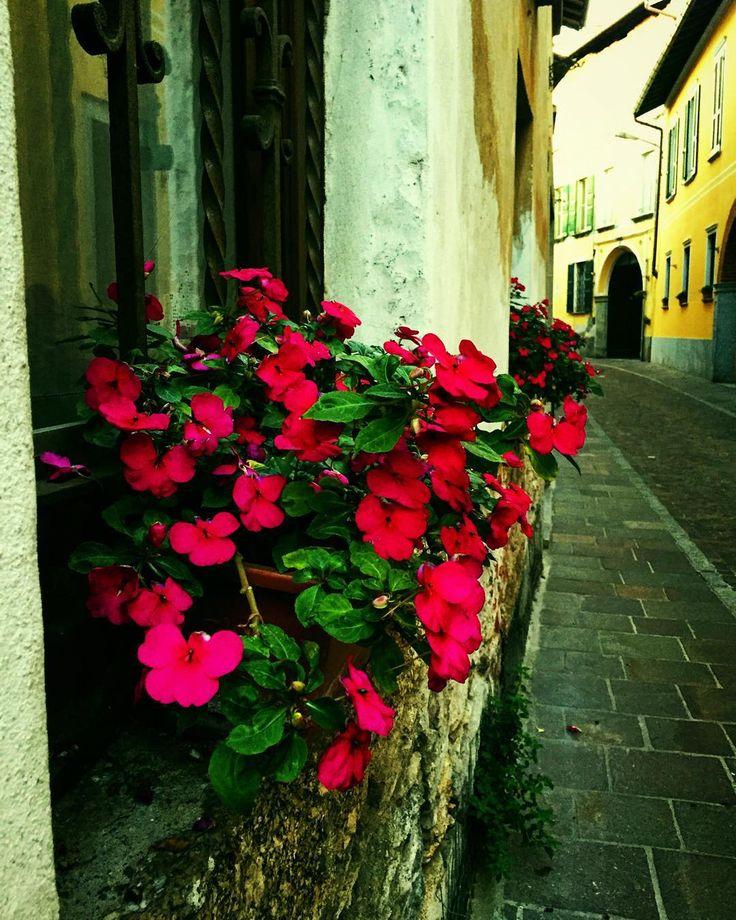 #walkingalone #sommalombardo #mycity #igersvarese #flowersofinstagram #italy #streetphotography #windowsflower