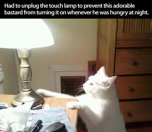 Cats are jerks.  (Duly noted, I will never be buying a touch lamp.)