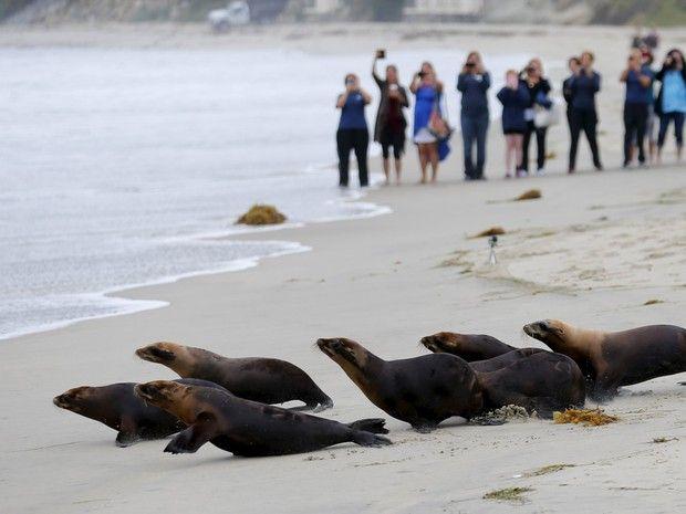 """""""O GRITO DO BICHO"""": Leões marinhos voltam ao mar após sofrerem ataque ..."""