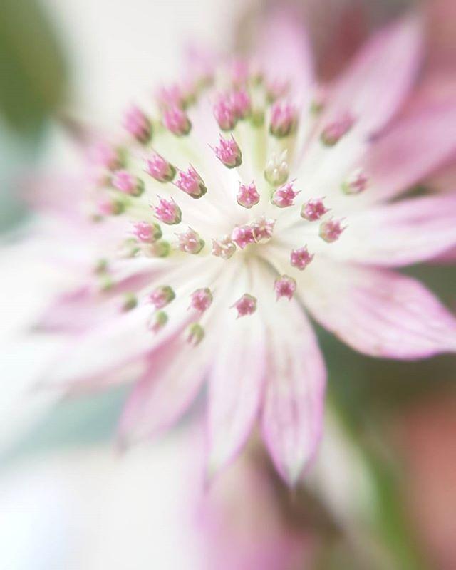 Rainy Sunday...camera phone & macro lens & @thecrateflowers bunch of flowers