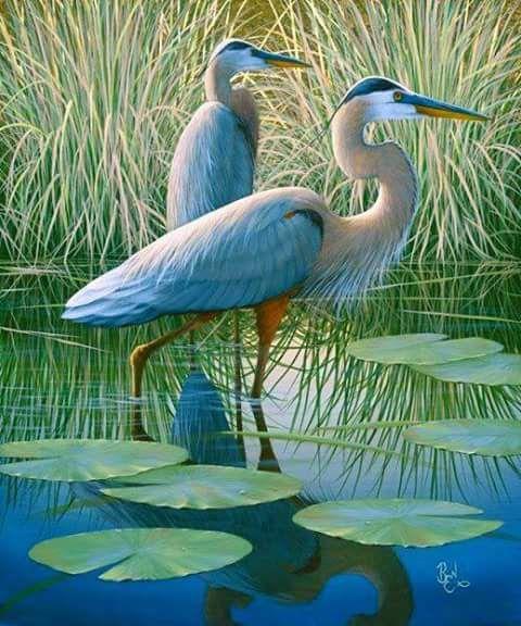 Americana+ — angel-kiyoss:   nice birds.