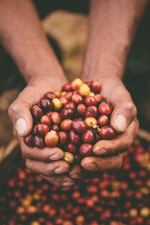 #nicaragua #coffee #coffeefarmers #katiebasbagill #bohemianredimages #coffeebeans