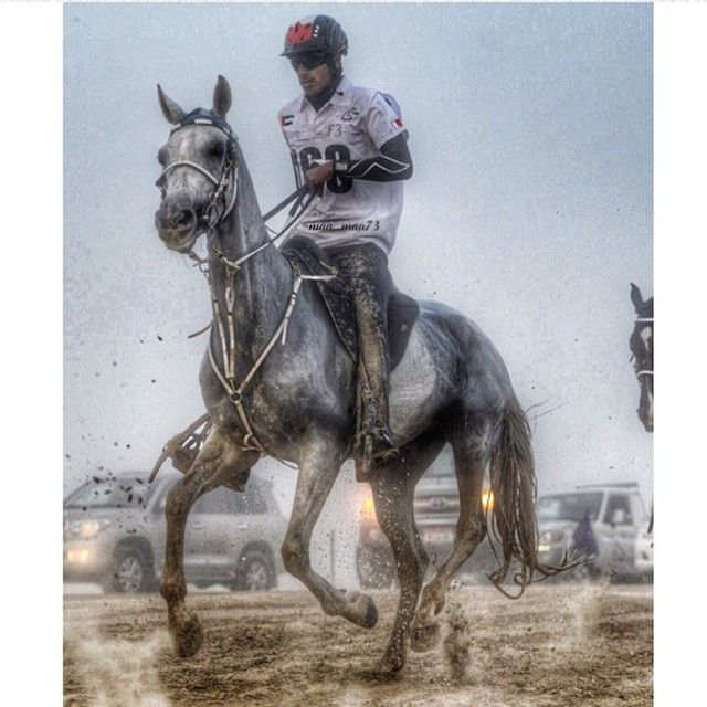 12/13/14 Al Dahfrah Endurance PHOTO: maamaa73 s_elharbi on JJ Princesa