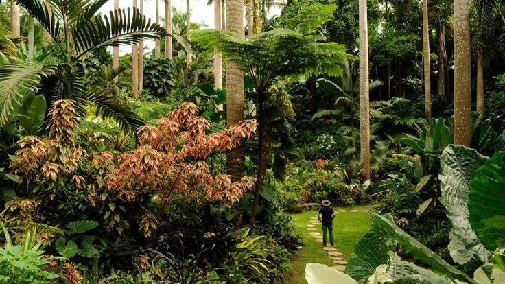 Niché au creux d'un ravin, le fabuleux jardin d'Anthony Hunte est un hommage à la nature originelle de l'île.