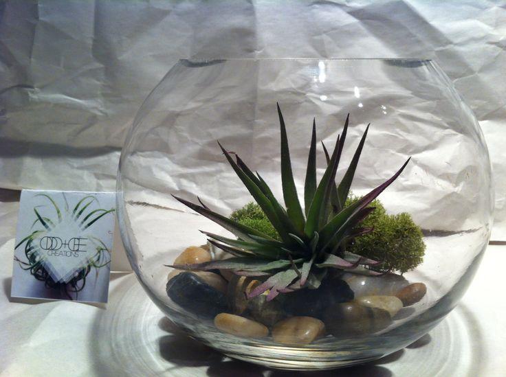 Small Orb Terrarium - $25