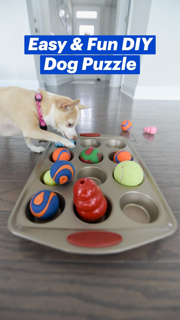 Diy Dog Bed, Doggie Beds, Doggies, Dog Treat Recipes, Healthy Dog Treats, Reactive Dog, Dog Puzzles, Cute Dog Pictures, Dog Rooms