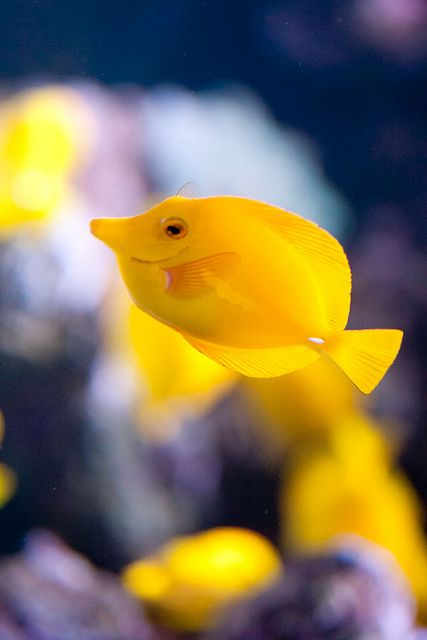 ayustar:  Happy Fish by Michael Zampelli on Flickr.