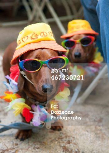 Veja Foto de stock de Dressed Up Dogs. Encontre fotografias premium e de alta resolução na Getty Images.