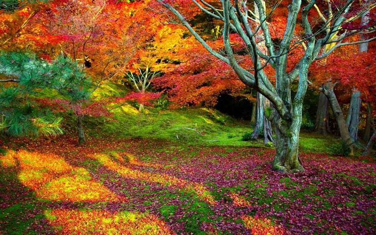 """"""" Nature always wears the colors of the spirit."""" Ralph Waldo Emerson"""