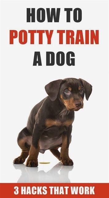 Upstate Dog Training Greer Sc Dog Training Zak Youtube Dog