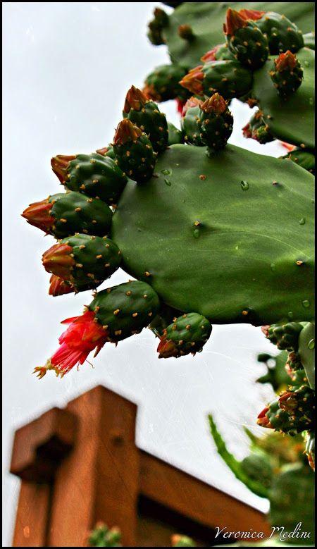 YOU ARE INVITED TO READ AN INTERESTING ARTICLE ABOUT THIS TOPIC IN THE FOLLOWING LINK: http://wol.jw.org/en/wol/d/r1/lp-e/102005812 LEA UN INTERESANTE ARTÍCULO SOBRE ESTE TEMA EN EL SIGUIENTE ENLACE: http://wol.jw.org/es/wol/d/r4/lp-s/102005812 .