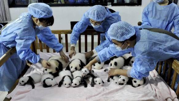 China: Willkommen in der Panda-Kita