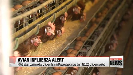 #Pyeongtaek battles with outbreak of highly pathogenic avian influenza - The World On Arirang: The World On Arirang Pyeongtaek battles with…