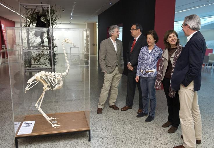 Los miembros de la organización observan una de las piezas clave de la exposición: una 'Rhea americana' (ñandú), cuyo animal Darwin quería conocer y que pertenece al Museo de Anatomía Comparada de Vertebrados de la Universidad Complutense de Madrid.