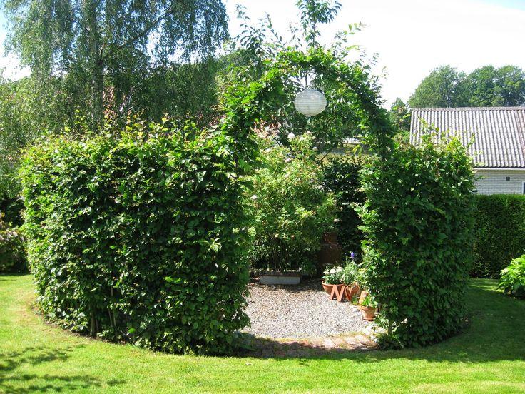 Hallontrollets trädgård: Stenön