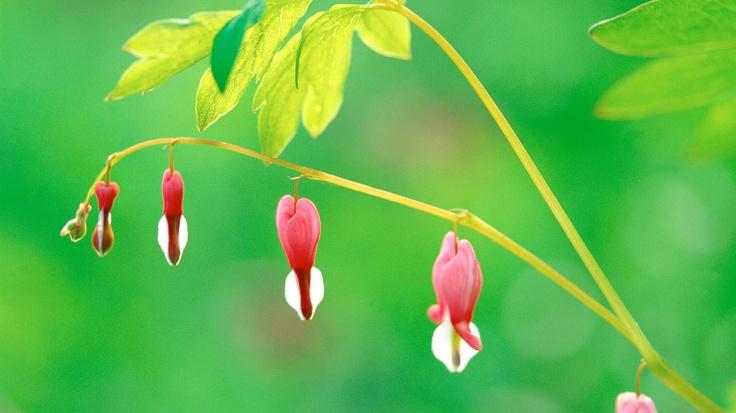 Gambo; natura; rosa; pianta; fiore, foglia e verde.