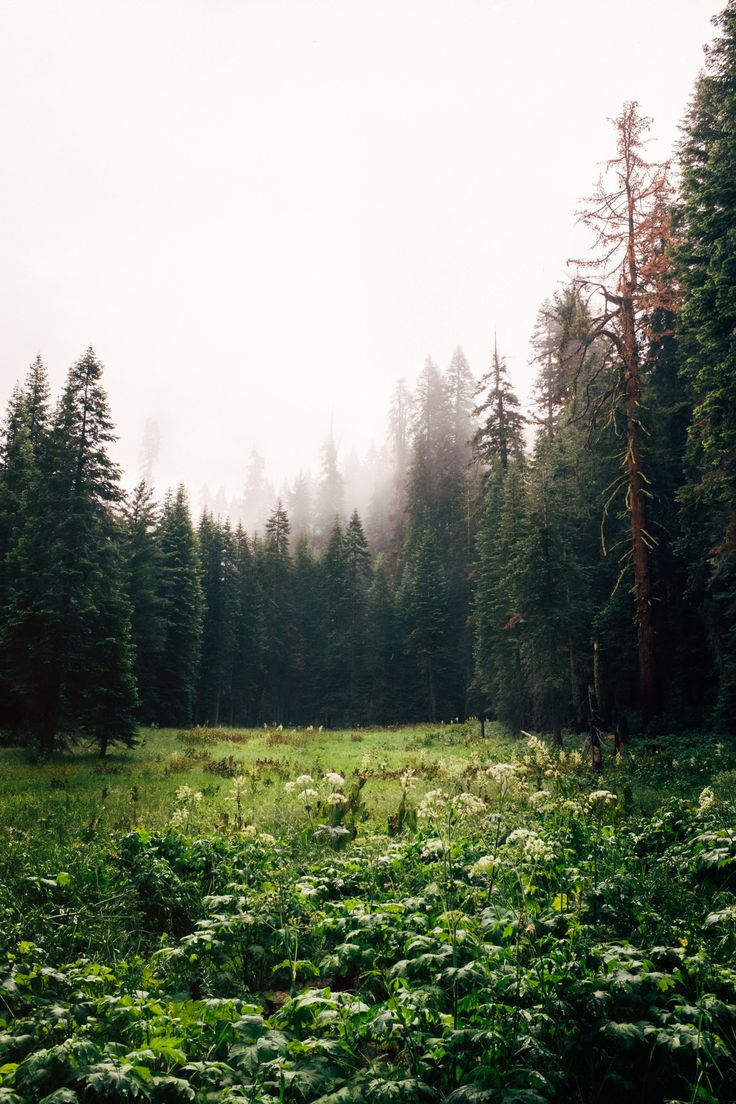 stevensaillant: Sequoia 2015