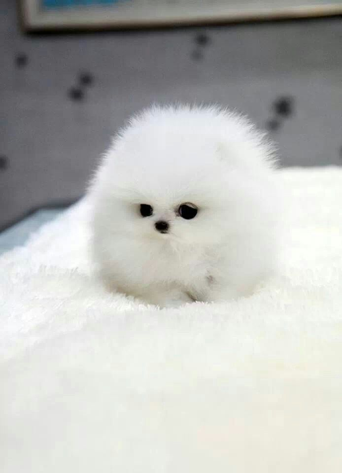The fluffiest