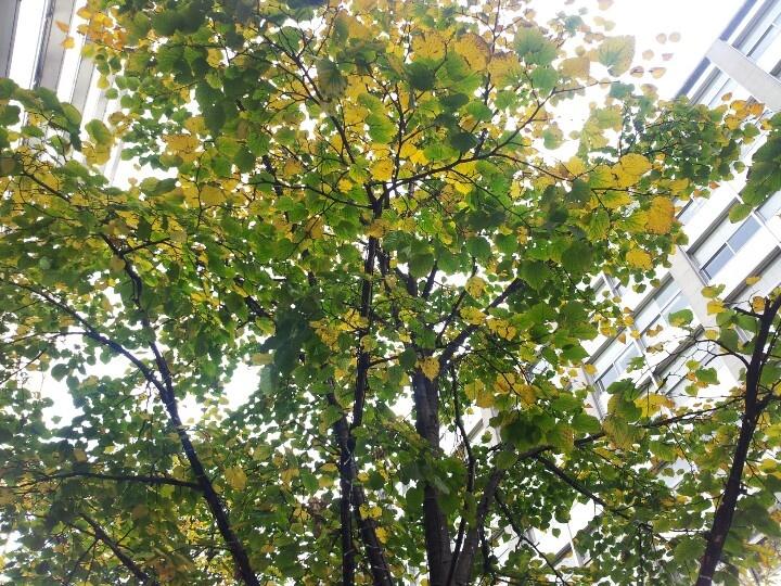 丸の内仲通りに秋が来てます