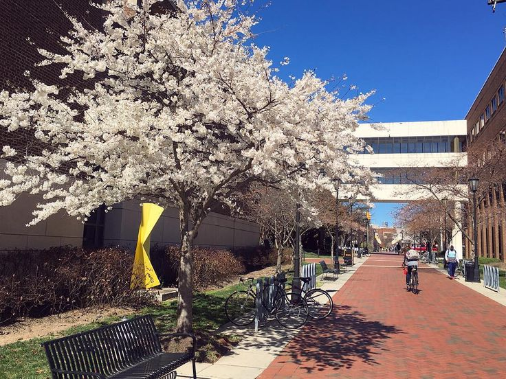Blooming trees on Virginia Commonwealth University's campus