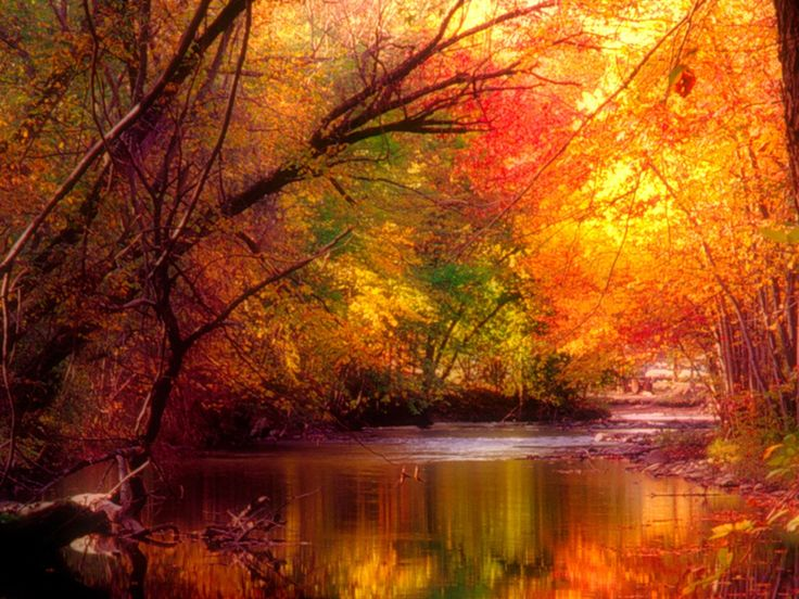 Deskdeco wallpaper downloads four seasons wallpaper autumn deskdeco wallpaper downloads four seasons wallpaper autumn leaves pinterest autumn autumn scenery and scenery voltagebd Images