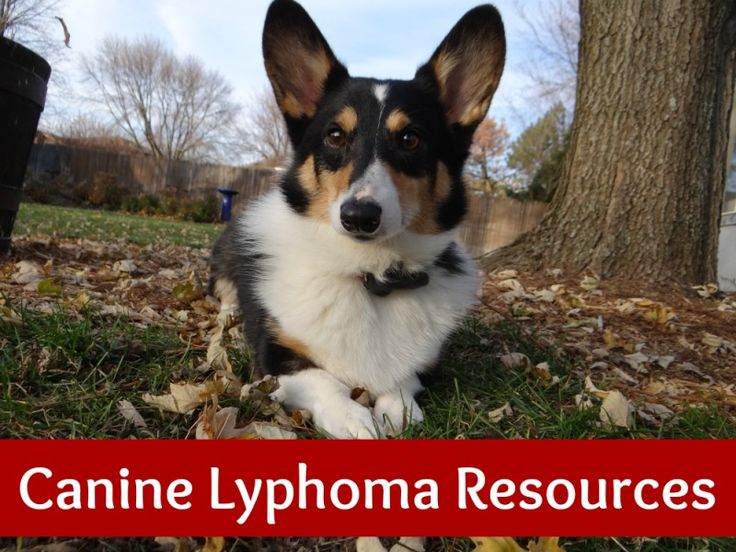 Is canine lymphoma painful
