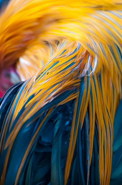 Feathers: Blue and Yellow