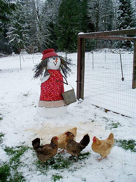 Keep your chickens (or cats or dogs) happy during the holidays with special foods... #myHolidayCookbook #Contest