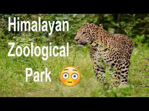 Backpackers: The Himalayan Zoological Park Gangtok, Sikkim