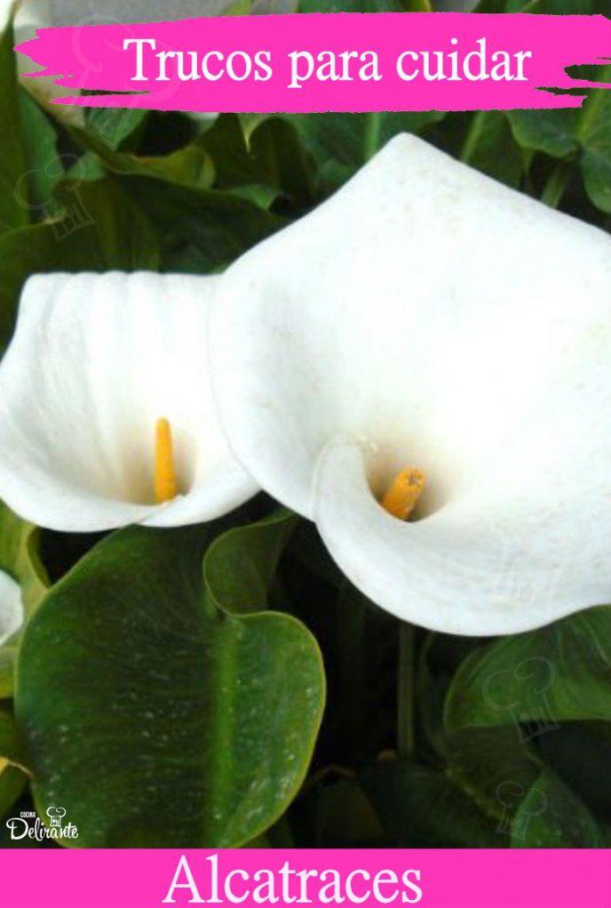 Ideas Para, Farmer, Garden Ideas, Outdoors, Tips, Green, Nature, Plants, Gardens