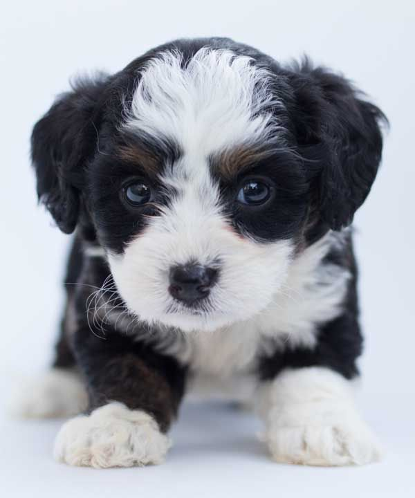 Why Are Baby Animals So Cute 5 Reasons We Can T Help It Baby