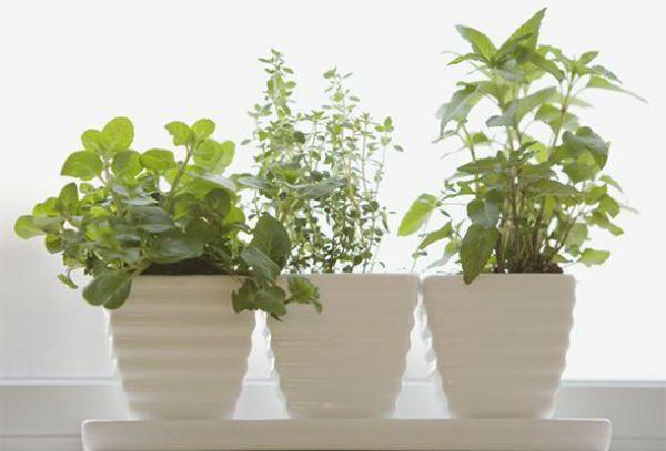 Comment Créer un Jardin de Fines Herbes Intérieur