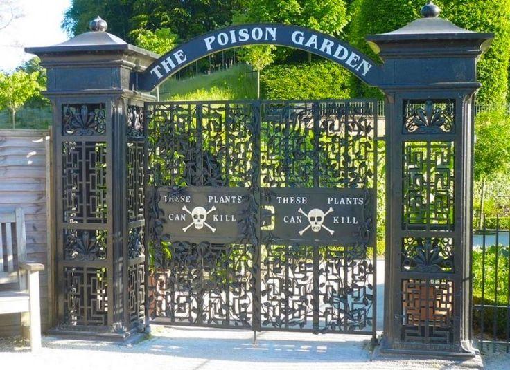 """Boa noite amigos plantadores!💚  Há um jardim bem incomum na cidade Alnwick, no Norte da Inglaterra. Diferente da maioria dos jardins que encontramos espalhados pelo mundo, este """"diferentão"""" é totalmente voltado as espécies mais perigosas que existem. Nele encontram-se mais de 100 espécies de plantas venenosas.O Poison Garden é cercado por muros e grades e, logo na entrada, um quadro adverte os visitantes com os dizeres """"Essas plantas podem matar"""". Até mesmo os funcionários do local…"""