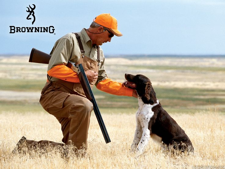 257 best hunting dogs images on pinterest   hunting dogs, german